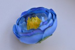 Голова пиона синий